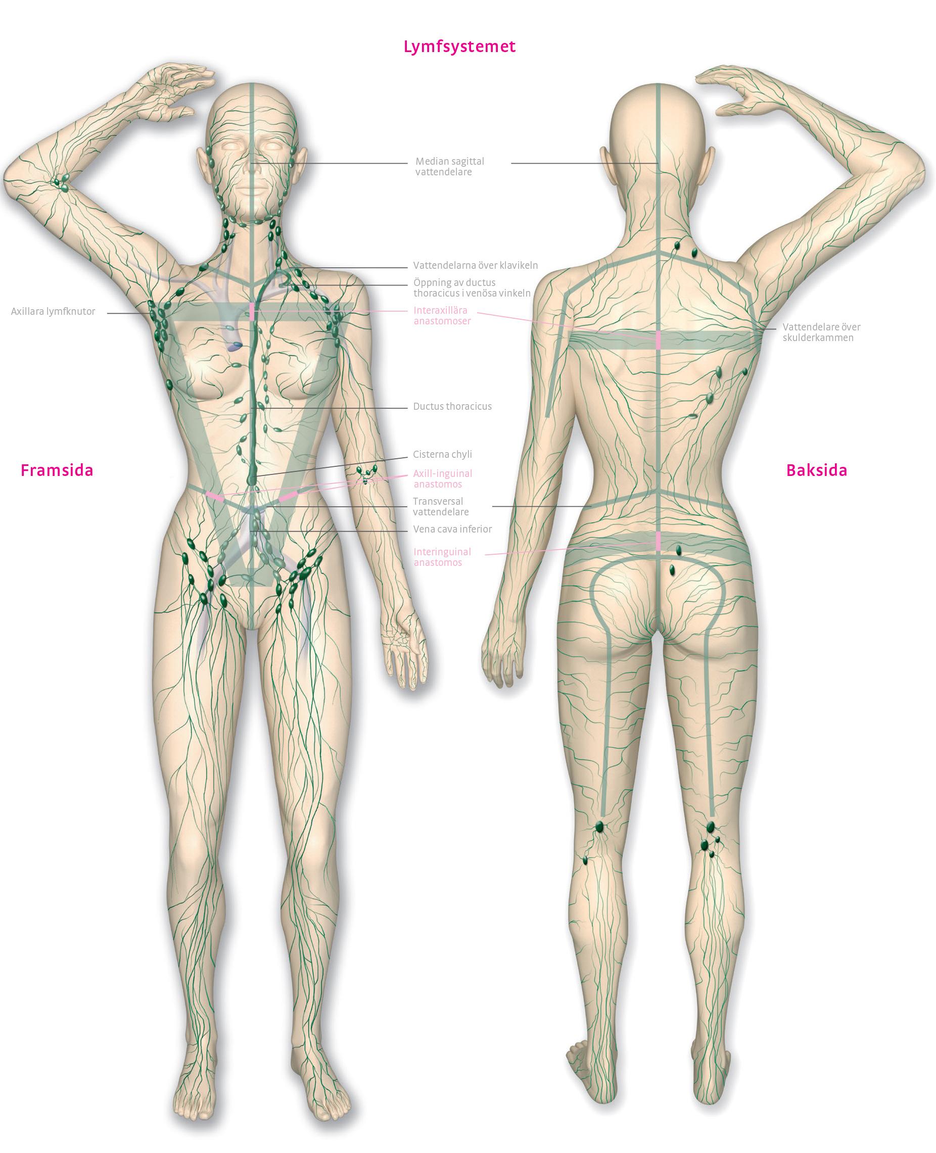 problem med lymfsystemet symptom